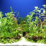 Bild: Arnold Design Aquarium - Foxtrott Denise volume FIVE (2006) im eingerichteten Zustand mit einem künstlich angelegten Weg.