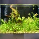 "Bild: Foxtrott volume ONE (2005) / Arnold Design Aquarium ""Foxtrott volume THREE"" im bepflanzten Zustand."