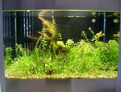 """Bild:Arnold Design Aquarium """"Foxtrott volume THREE"""" (2005) in Edelstahl-Aluminiumausführung mit einem wunderschönem Layout."""