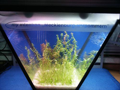 """Bild: Idee und Umsetzung / Das Arnold Design Aquarium """"Mecklenburg-Vorpommern"""" (2006) mit seiner noch jungfräulichen Bepflanzung. Darüber umschmeichelt die Wasserlinie sanft die Schrift. Experience The Beauty"""
