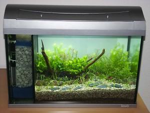 Bild: Ein von Arnold Design Aquarien getuntes 60er Tetra AquaArt Aquarium-Set mit Bepflanzung, einer ausreichenden Beleuchtung und einem 3 Kammer Innenfilter.