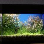 Bild: Aquariumtuning / 60er Waterhome Set im bepflanzten Zustand.