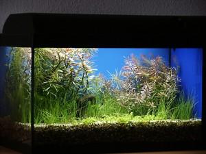 Bild: Tetra AquaArt-Aquarium / Ein von Arnold Design Aquarien getuntes 60er-Set von Waterhome, beleuchtet mit 4x15 W Arcadia Freshwater T8 Leuchtstoffröhren.