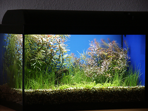 aquariumtuning ein 60er waterhome mit 4 leuchtstoffr hren u 9 l filter arnold design aquarien. Black Bedroom Furniture Sets. Home Design Ideas