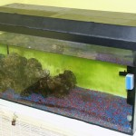 Bild: Neueinrichtung eines Aquariums (2006) / Diese Aquarium war nur noch ein Zustand, völlig vernachlässigt. Der fehlende Wasserstand spricht Bände. Die lieblose arrangierte Geröllhalde ist ein weiteres Zeugnis für die Unfähigkeit des Besitzers.