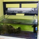Bild: Neueinrichtung eines Aquariums (2006) / Ein 80 cm Juwel Aquarium mit einer 18 Watt Leuchtstoffröhre auf 96 Liter Wasser. Das nenne ich mal Licht- Wasserverhältnis :-( (2006).