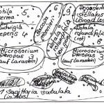 Bild: Neueinrichtung eines Aquariums (2006) / Ein von Arnold Design Aquarien im Vorfeld erstellter Pflanzplan für die Neugestaltung eines 96 Liter Juwel Aquariums (2006).