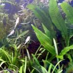 Bild: Neueinrichtung eines Aquariums (2006) / Nach der 3-wöchigen Einfahrphase zogen die ersten Algenfresser ein (2006).