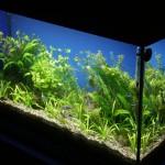 Bild: Neueinrichtung eines Aquariums (2006) / Ein Blick über die Diagonale in das Innere des neu bepflanzten Juwel Aquariums (2006).