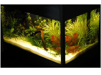 die lichteinheit versteckt sich unter sandgestrahltem glas arnold design aquarien. Black Bedroom Furniture Sets. Home Design Ideas