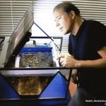 """Bild: Das Licht aus dem Aquariuminneren / Arnold Design Aquarium """"Mecklenburg-Vorpommern"""" mit geöffnetem Beleuchtungsmodul. In das Innere des Aquariums wirft der Designer Erik Maik Arnold gerade einen prüfenden Blick."""