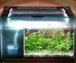 """Bild: Arnold Design Aquarium """"Foxtrott volume TWO"""" (2005) gewährt hier einen gewollten Blick auf die Förderpumpe im Inneren des Filters. Bei diesem Aquarium wurde der Filter über die Tiefenseite verbaut."""