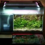 """Bild: Arnold Design Aquarium """"Foxtrott volume TWO"""" (2005). Die Garnelenzeitschrift im Vordergrund zeigt ganz deutlich, wie groß die bepflanzte Grundfläche wirklich ist."""