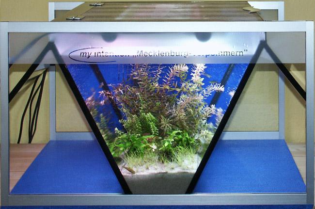 """Bild: Mecklenburg-Vorpommern (2006) / Das Arnold Design Aquarium """"Mecklenburg-Vorpommern (2006)"""" im eingerichtetem Zustand)"""
