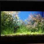 Bild: Aquariendekoration aus Kunststoff / Getuntes 60er Waterhome Set