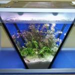 """Bild: Die Bepflanzung / Arnold Design Aquarium """"Mecklenburg Vorpommern"""" im eingerichteten Zustand."""