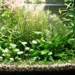 Bild: Arnold Design Aquarien / Tetra AquaArt – Nano-Aquarium 20 Liter mit einer gelungenen Bepflanzung. Nano-Aquaristik in Güstrow / Mecklenburg-Vorpommern.