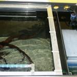 Bild: Filtertuning - Vom Kleinen ins Große / Blick in ein für den Besatz vorbereitetes Aquarium mit abgehängten Moorkienwurzeln und blauer LED-Nachtbeleuchtung.