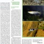 Bild: Pressemitteilungen / Pet 4/2007 Kleines Becken, kleine Fische