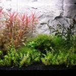 Bild: Licht und Filtertuning / Tetra AquaArt Aquarium (2010)