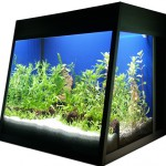 Bild: Foxtrott Denise volume FIVE (2006) - Ein Nano Lifestyle Aquarium mit 63,5 Litern Inhalt