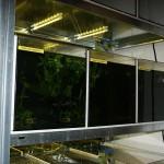 Bild: Garnelenzucht / Die Zuchtanlage für Garnelen mit Blick auf die LED-Beleuchtung