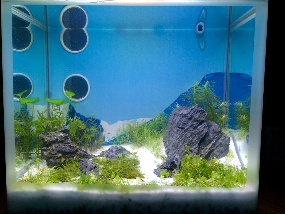 nano aquarium einrichten affordable aquascaping im aquarium with nano aquarium einrichten. Black Bedroom Furniture Sets. Home Design Ideas